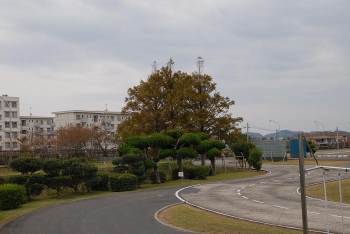 D20_0202.jpg